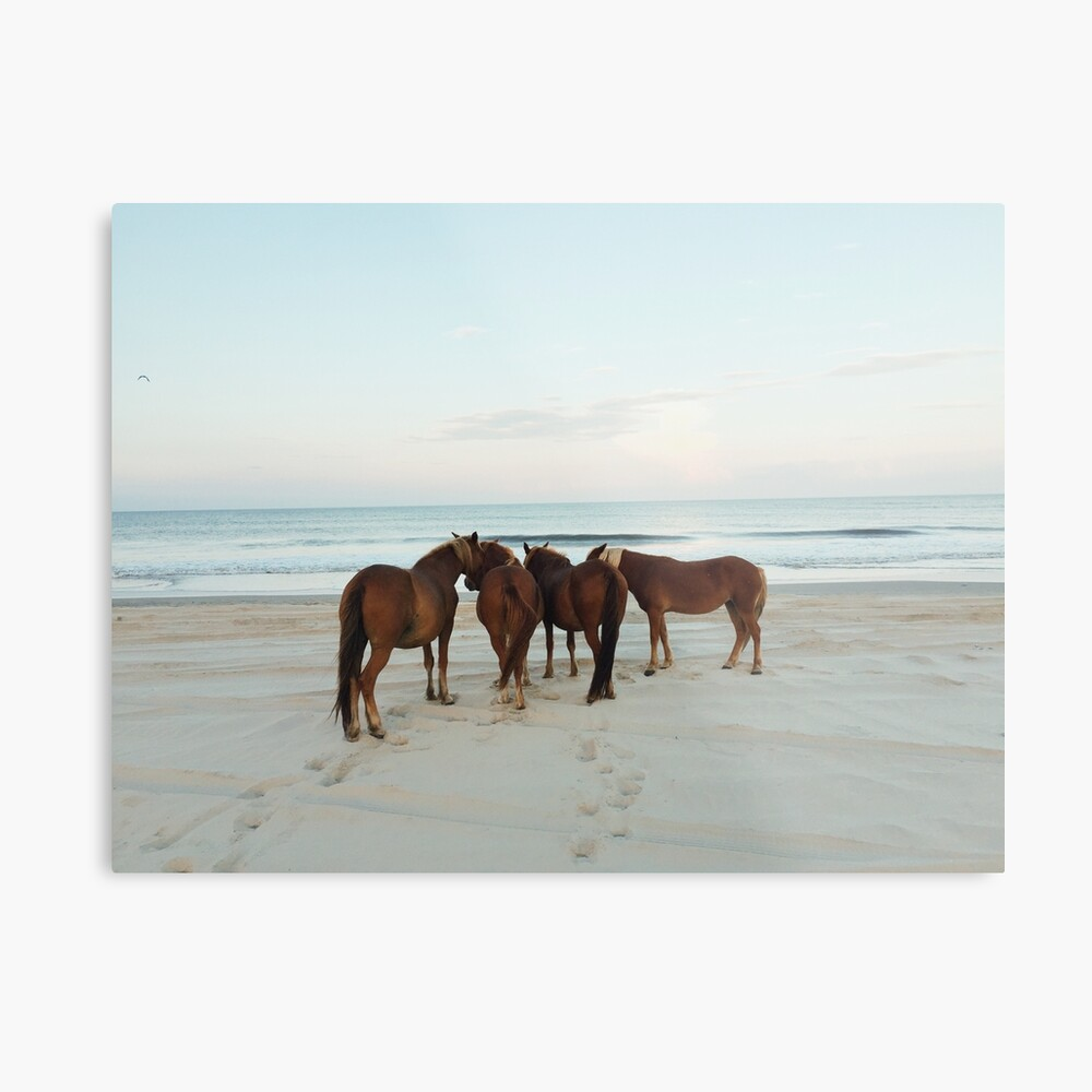 Coastal Horse Meeting Metal Print