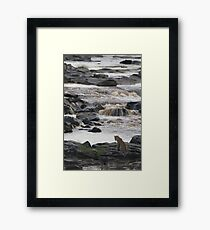 Leopard at the River - Léopard à la rivière Framed Print
