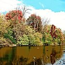 Fall Trees along the Rideau Canal, Ottawa, ON Canada by Shulie1