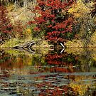 McDonough Lake in Autumn by Jimmy Ostgard