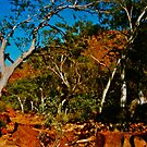 The Garden Of Eden Walk Kings Canyon NT by Ronald Rockman
