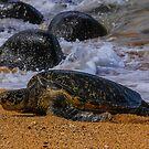 Sunbathing Sea Turtle by Shari Galiardi
