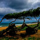Beach Trees by Shari Galiardi