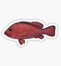 Red Sea Coral Grouper Sticker