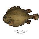 Lumpfish by Eugenia Hauss