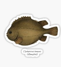 Lumpfish Sticker