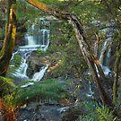 Upper Turtons Creek Falls by Simon Penrose