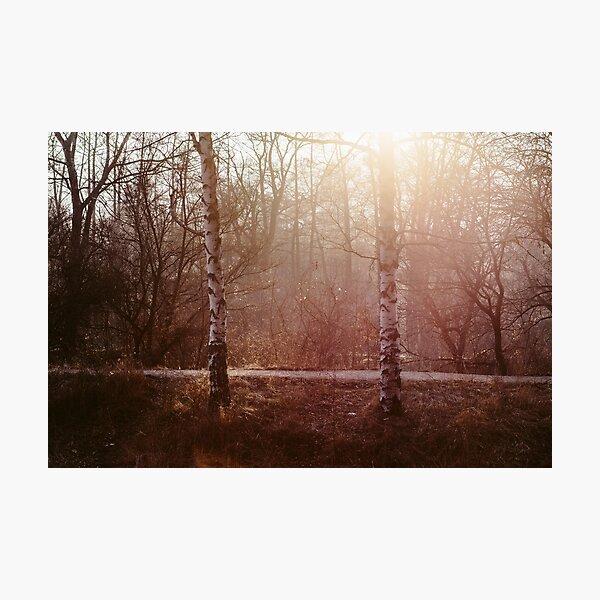 Wintersun's Delightful Touch Photographic Print
