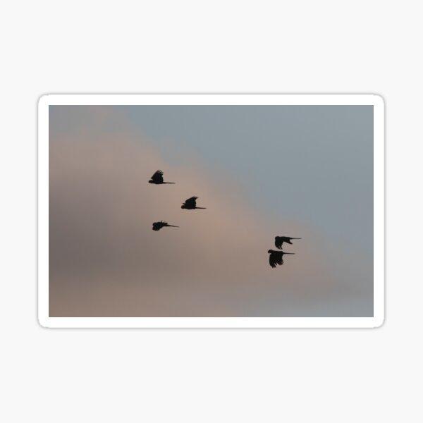 Cockatoos At Sunset Sticker
