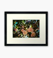 Natural World - Magnolias and light Framed Print