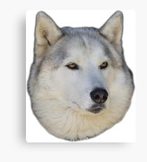 Husky White wolf Canvas Print