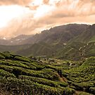 Cameron Highlands Tea Plantation I by zhao wei koh