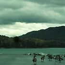 Green lighting and geese by Ann Palmieri