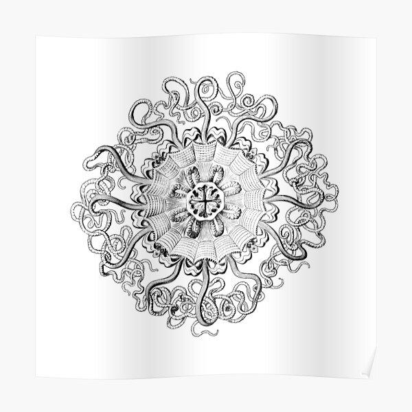 Micro-Nature - no 22- Intricate Black circle  Poster