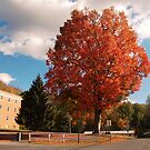Colors of Milligan College by Ann Palmieri