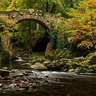 Foleys Bridge, Tollymore Forest Park by Adrian McGlynn