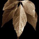 Autumn Gold by Christine Lake