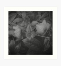 SECRET FLOWERS OF PARADOX (black & white) Art Print