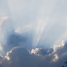 Little Ray of Light by Geraldine Miller