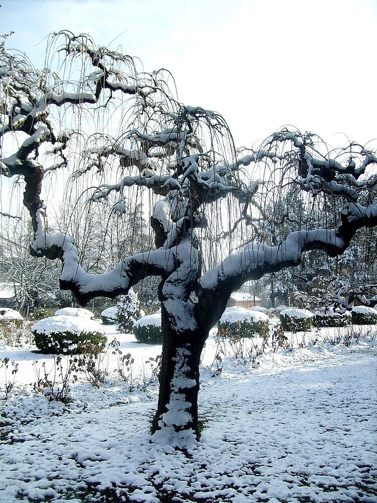An unusual tree by Ana Belaj