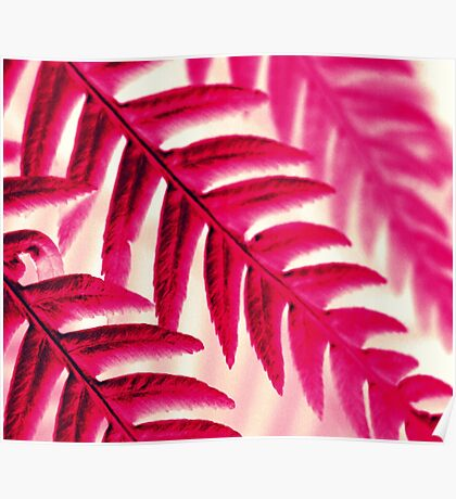 Nature Pattern # 1 - Fern (Red Pink) Poster