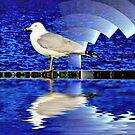 Symphony in Sea(Gull) Minor by kenspics