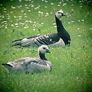Goose and Gosling Away From the Gaggle by M-EK