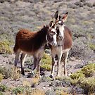 Baby and Mama Burro by Sandy O'Toole
