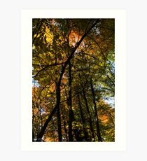 Fall Leaves A Changin' Art Print