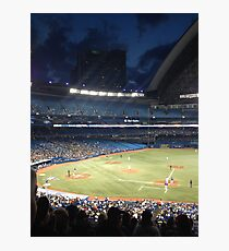 Blue Jays  Photographic Print