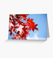 Autumn coloured leaves blue sky background Greeting Card