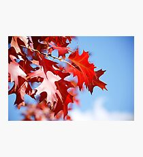 Autumn coloured leaves blue sky background Photographic Print
