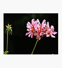 Flower #6 Photographic Print