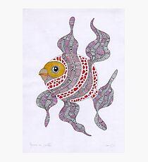 Clown fish  (original sold) Photographic Print