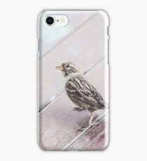 The Curious Sparrow iPhone Case/Skin