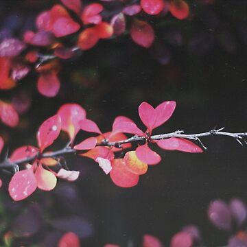 Fall by christinevanfon