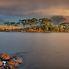 Pine Island Early Light by Derek Smyth