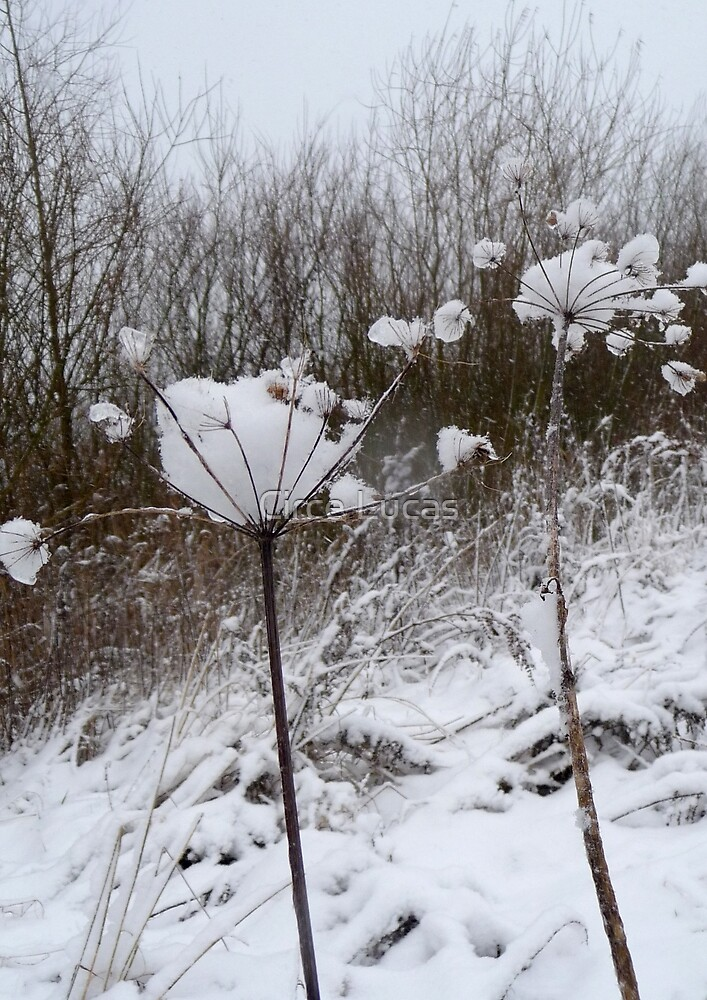 Annes Lace in Winter by Circe Lucas