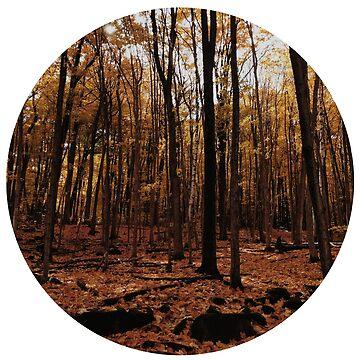 Bosque de otoño de leaamaarie