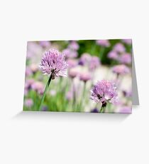 Flowering Chives Greeting Card