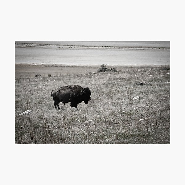 Retro Bison Photographic Print