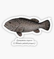 Grouper goliath Sticker
