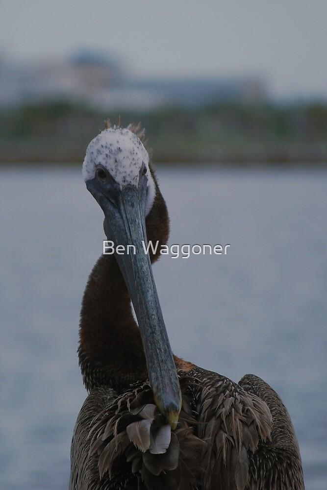 Brown pelican preening by Ben Waggoner