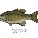 Largemouth bass by Eugenia Hauss