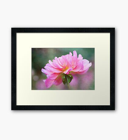 Painted Pink Dahlia  Framed Print