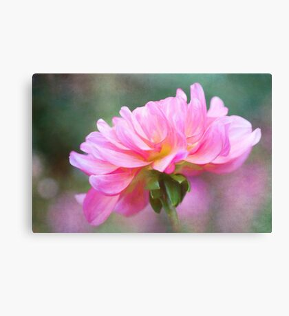 Painted Pink Dahlia  Canvas Print