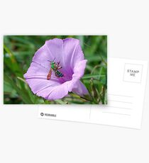 Green metallic bee on Ruellia Postcards