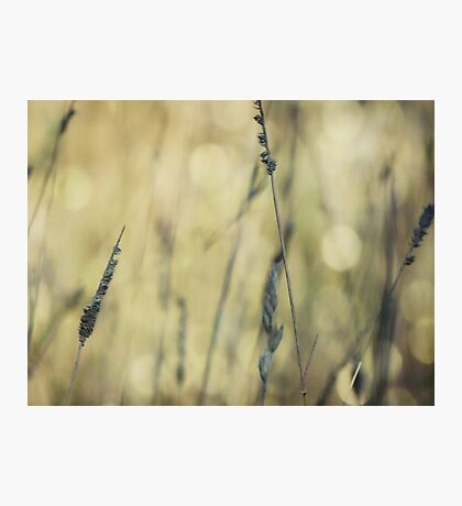 Wild Grasses 24 Photographic Print