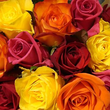 roses1 by fladelita