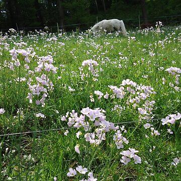 flower, grassland  beauty.... by fladelita